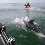Cork-Harbour-Boat-Trips-2