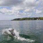 Cork-Harbour-Boat-Trips-3