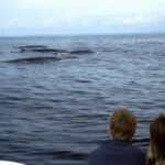 Whales-off-Old-Head-of-Kinsale-1